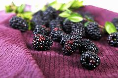 Fresh Blackberries on a Towel; Leaves Stock Photos