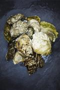 Assorted Fresh Oysters Stock Photos