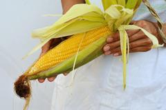 A woman holding a corn cob - stock photo