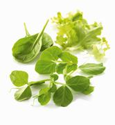 Pea shoots and lettuce leaves Stock Photos