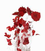 Red rose petals making a splash Stock Photos