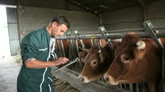 Stock Video Footage of farmer in barn using digital tablet