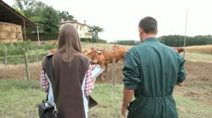 Veterinarian visiting cow breeder Stock Footage