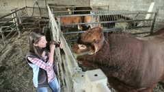 Upper view of woman in barn petting bull Stock Footage