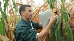 farmer checking on corn crops with digital tablet - stock footage