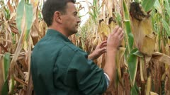 Farmer in field checking on corncobs Stock Footage