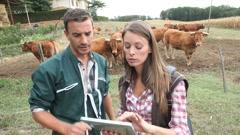veterinarian visiting cow breeder - stock footage