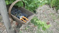 Closeup on vineyard row and harvest basket Stock Footage