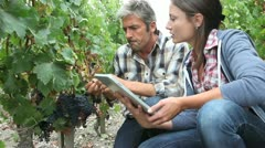 Winemakers in vine rows checking grapes quality Stock Footage