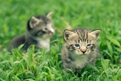 kitty in grass - stock photo