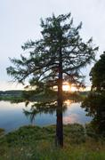 summer sunset lake view - stock photo