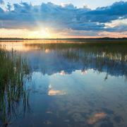 summer rushy lake sunset view - stock photo