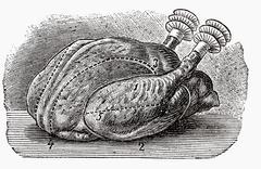 Poularde (illustration) Stock Illustration