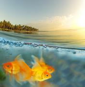 Trooppisia kaloja Kuvituskuvat