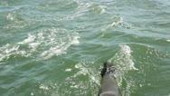 Seal swimming ocean Stock Footage