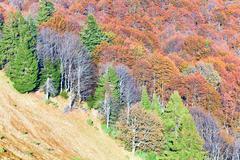 Autumn mountain forest Stock Photos