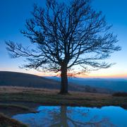 Stock Photo of lonely autumn naked tree on night mountain hill top