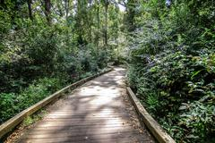 Wooden path in forest Stock Photos