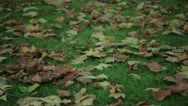 Leaves falling on the ground in a park in autumn Stock Footage