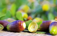 Acorns on wooden background Stock Photos