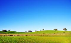 trees in alentejo field - stock photo