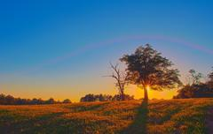 Stock Photo of tree on farmland at sunset