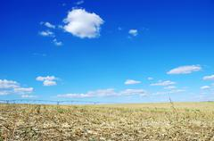 Stubble of cornfield at portugal Stock Photos