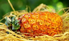 close up of a ripe pineapple - stock photo