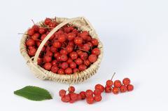 Rowan berries in a small basket Stock Photos
