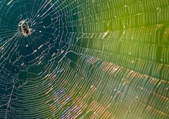 Stock Photo of spider web