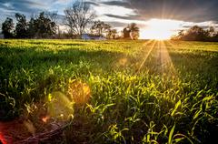 sunset over farm field - stock photo