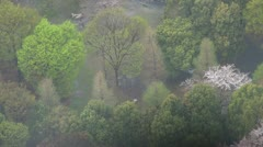 Aerial view of beautiful Japanese cherry blossom during rain, Tokyo Stock Footage