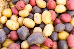 Colorful fresh potatoes on display Stock Photos