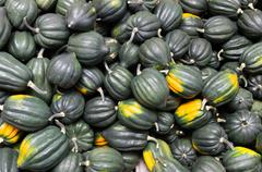 acorn or winter squash on display - stock photo