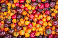 Fresh colorful hot peppers Stock Photos