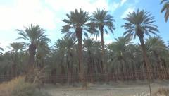 Palm trees plantation Stock Footage