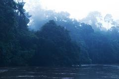 Stock Photo of Sunrise Over Amazonian Jungle