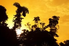 Amazonian teema Kuvituskuvat
