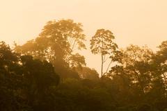 Stock Photo of Sunrise Over The Amazonian Jungle