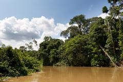 Stock Photo of Yasuni National Park Ecuador