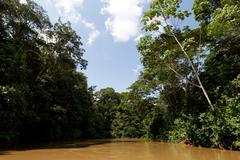 Yasuni National Park Ecuador - stock photo