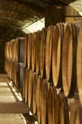 Wine barrels in Jean-Louis Trapet's wine cellar, Burgundy Stock Photos