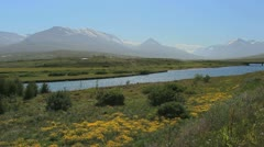 Iceland Eyjafjordur area with yellow flowers c Stock Footage