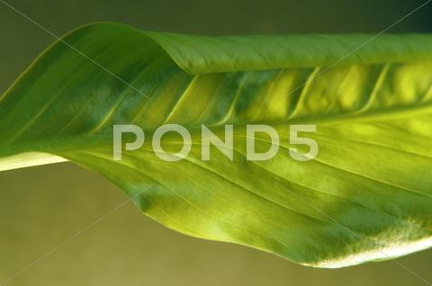 Stock photo of fresh green spring leaf