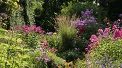 Garden phlox (Phlox paniculata) and reed grass (Calamagrostis x acutiflora 'Karl - stock footage