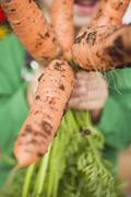 Child holding a bunch of carrots - stock photo