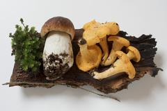 Cep and chanterelles on piece of wood Stock Photos