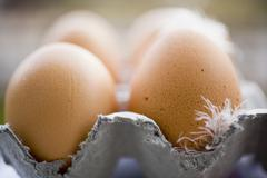 Stock Photo of Brown eggs with feathers in an egg box