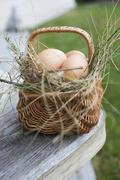 Brown eggs in a basket with hay Stock Photos
