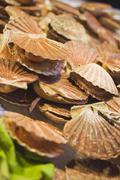 Scallops at a market - stock photo